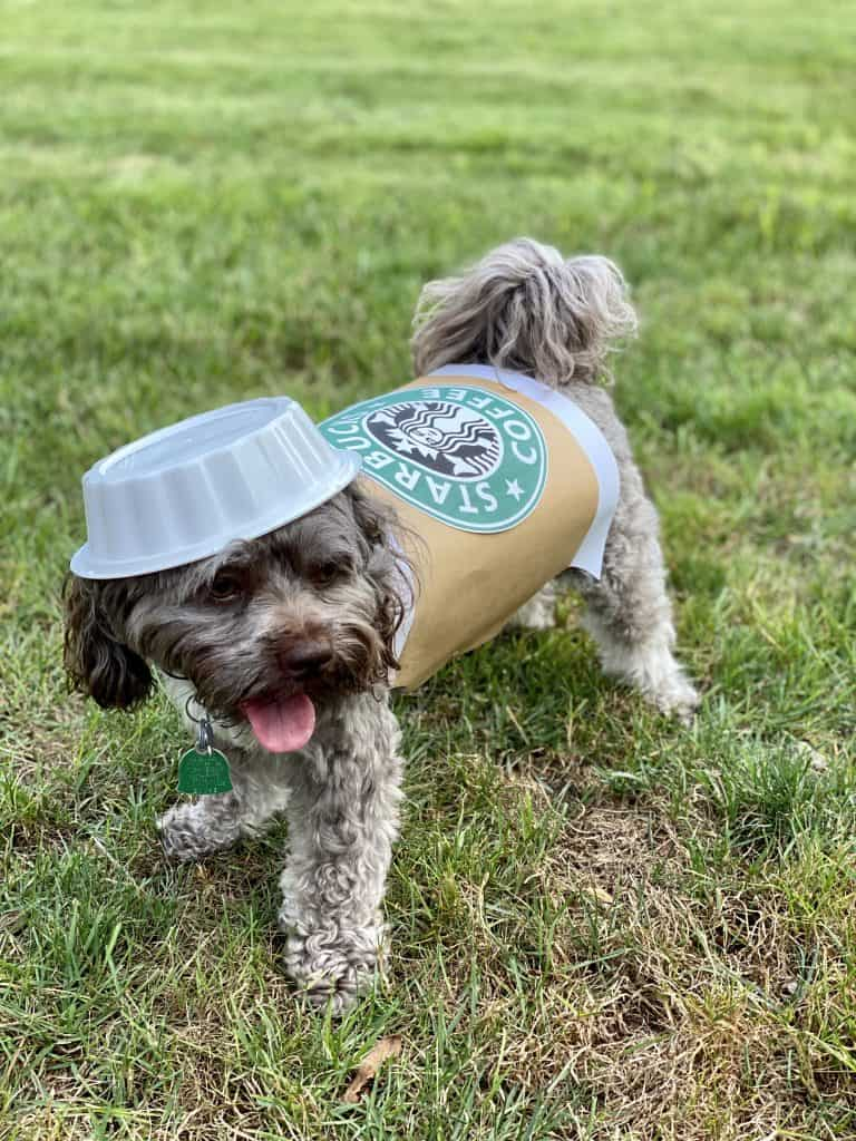 pet and owner matching starbucks costume