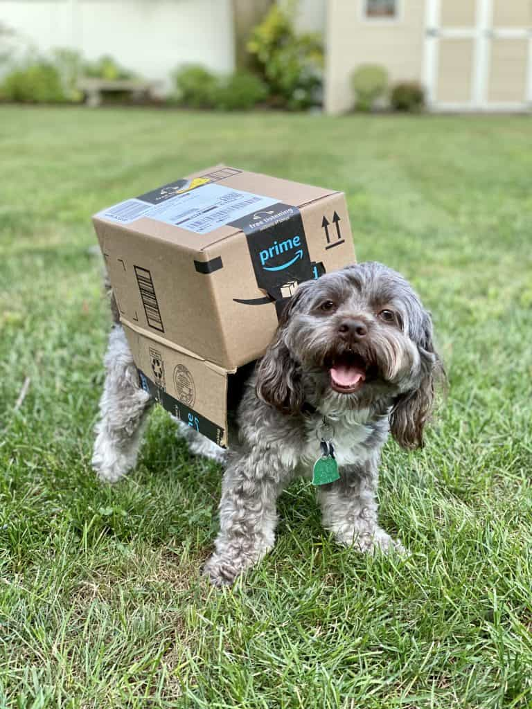 super cut costumes for dogs